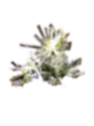 HMNS Selenite no background.png