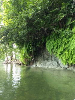 Trees on guadalupe river