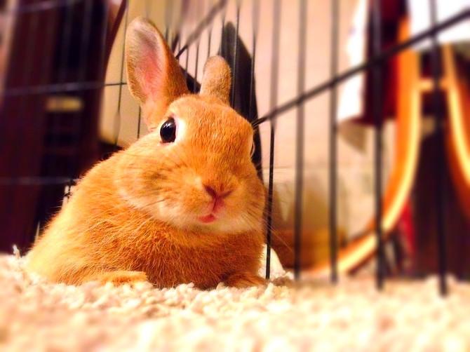 我が家のウサギさん