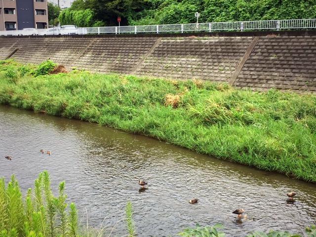 大栗川の日常