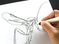 Pen and Ink Scientific Illustration