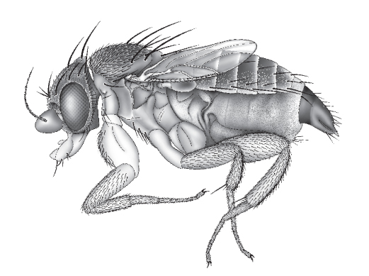 Digital Scientific Illustration
