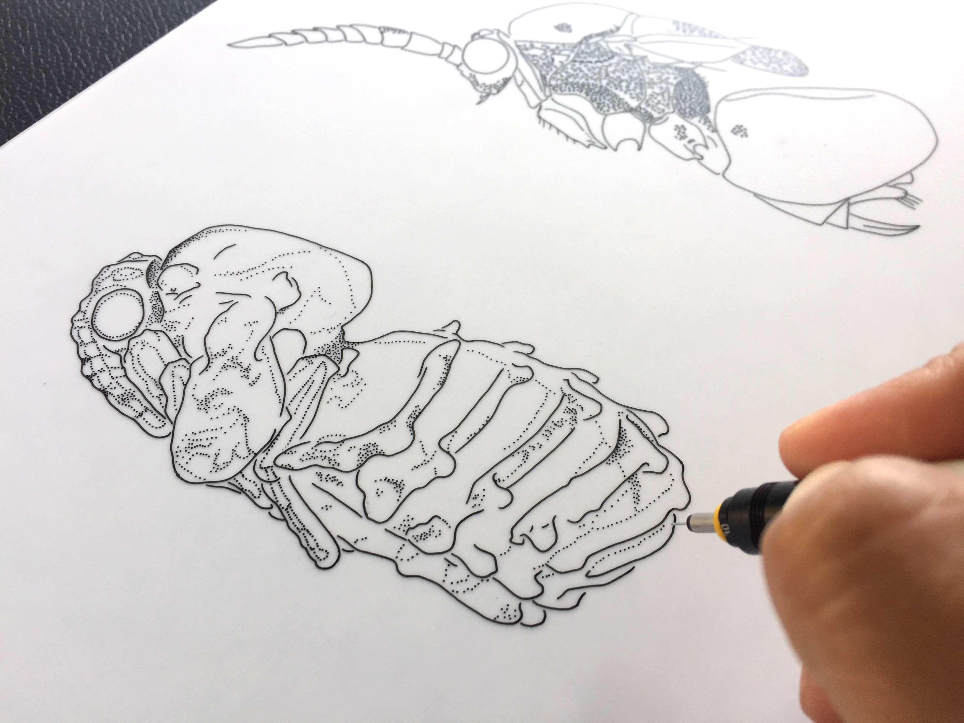Pen and Ink Scientific Illustration