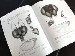 Illustrations for Research Articles