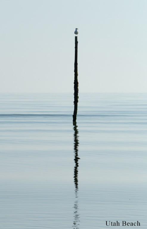 Mouette Utah Beach.jpg