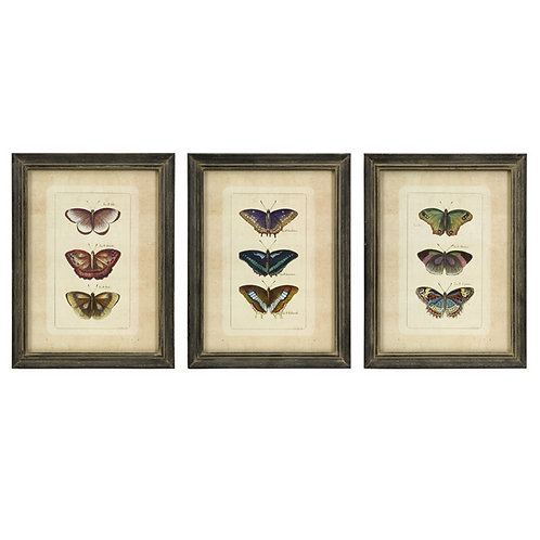 Clen Studio Butterfly Collection, set of 3