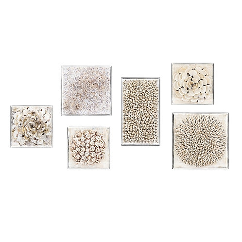 King Shell Collection, set of 6