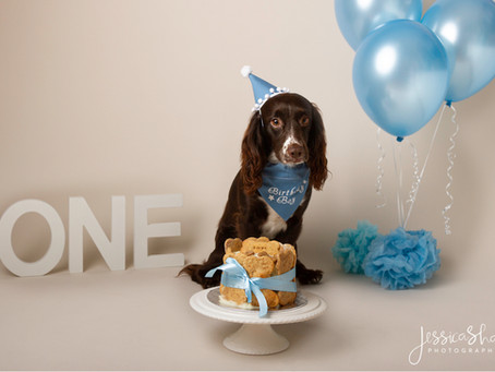 5 Adorable Pet Photography Ideas Every Pet Parent Will Love