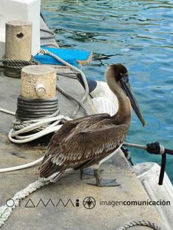 aves marinas