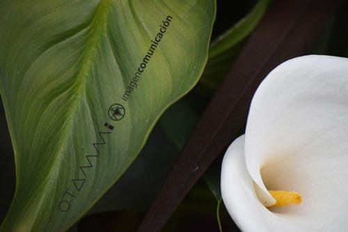 detalles-vegetación