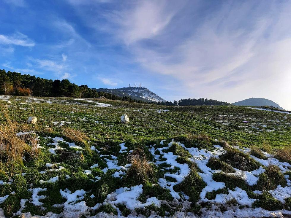 cammarata neve