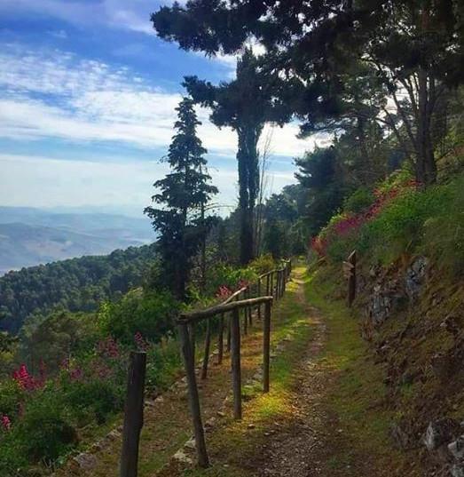 sentiero monte cammarata (2).JPG