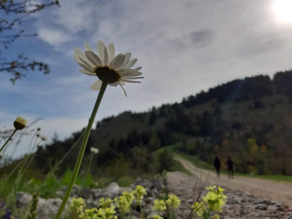 natura incontaminata monte Cammarata tra i monti sicani