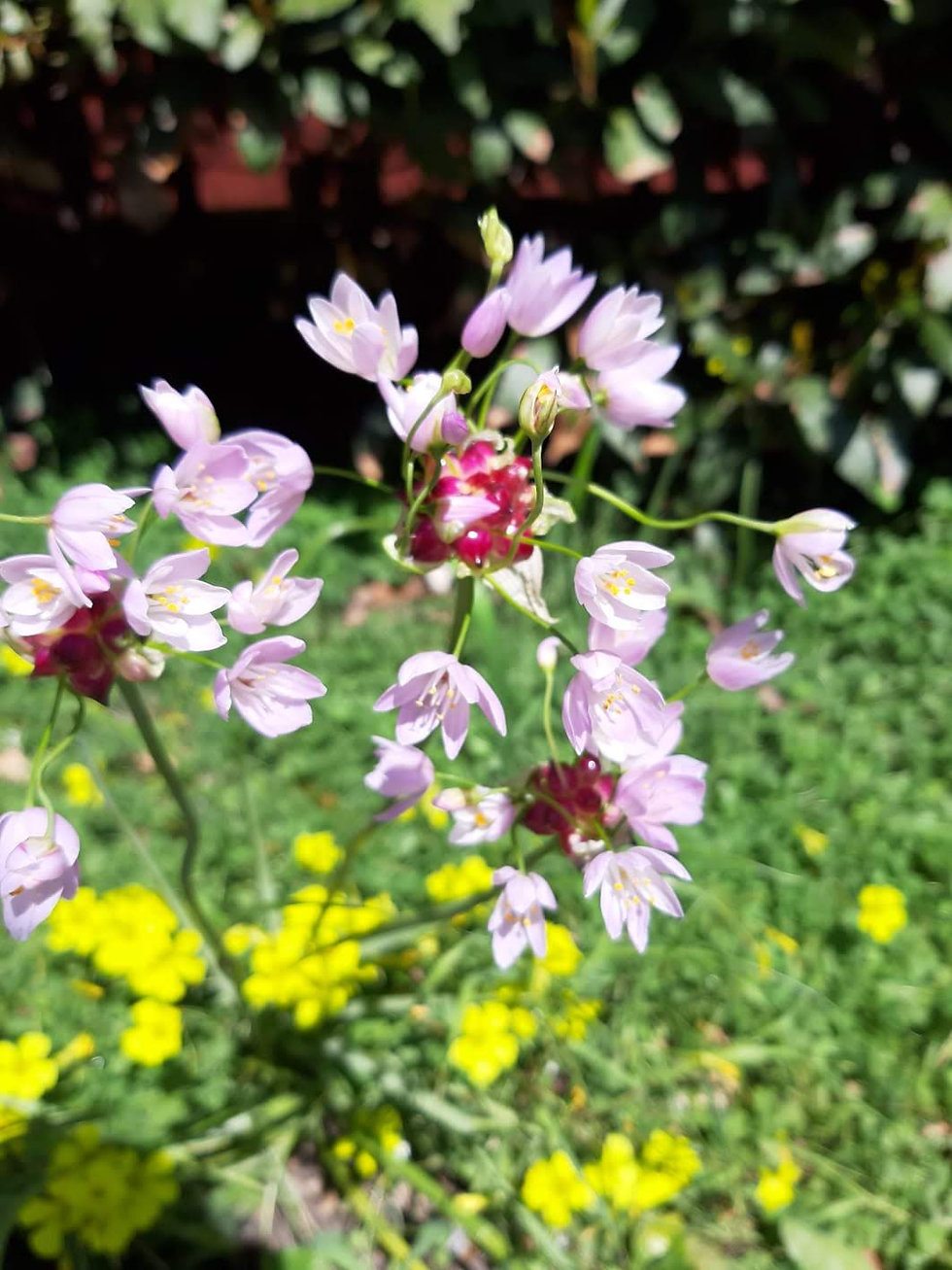 flora cammarata