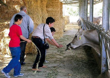 fattoria giambrone  (2).jpg