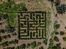 labirinto fattoria.jpg