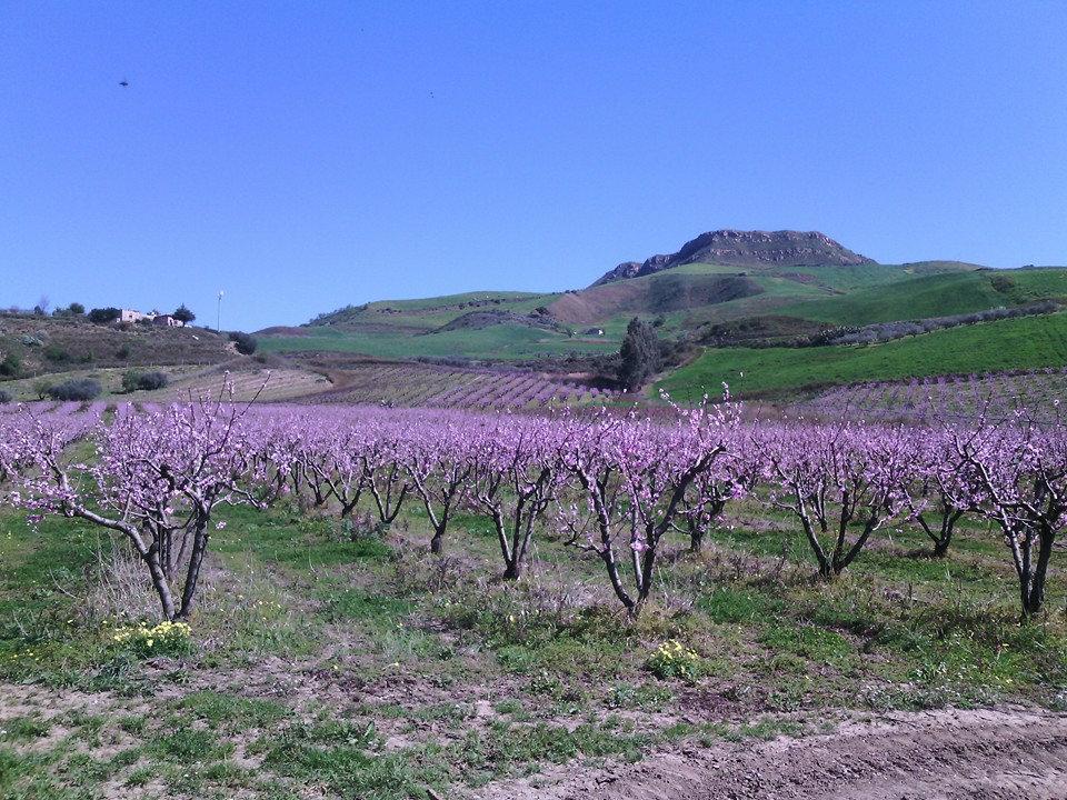 Azienda agricola giordano