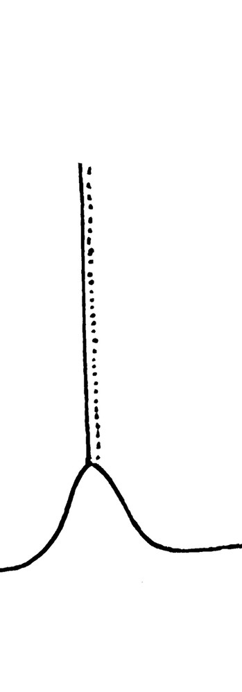 Straight Tail