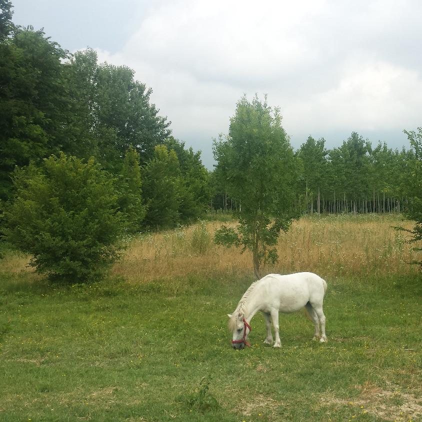 Eco Farm pony
