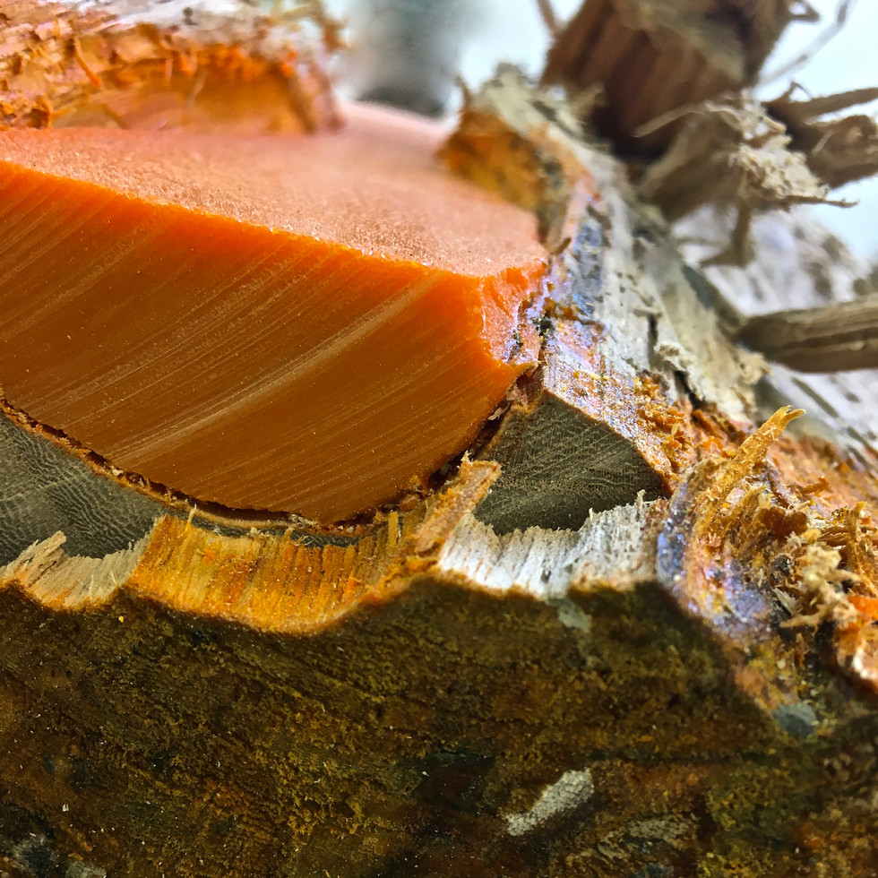 TFN specimen split log (fractured, orange) 2019