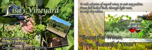 Lisa's Vineyard