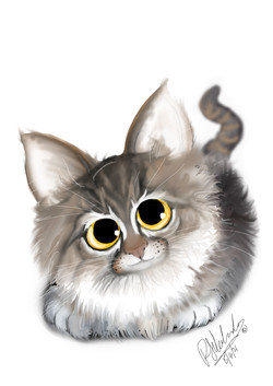 Kitten_1 2