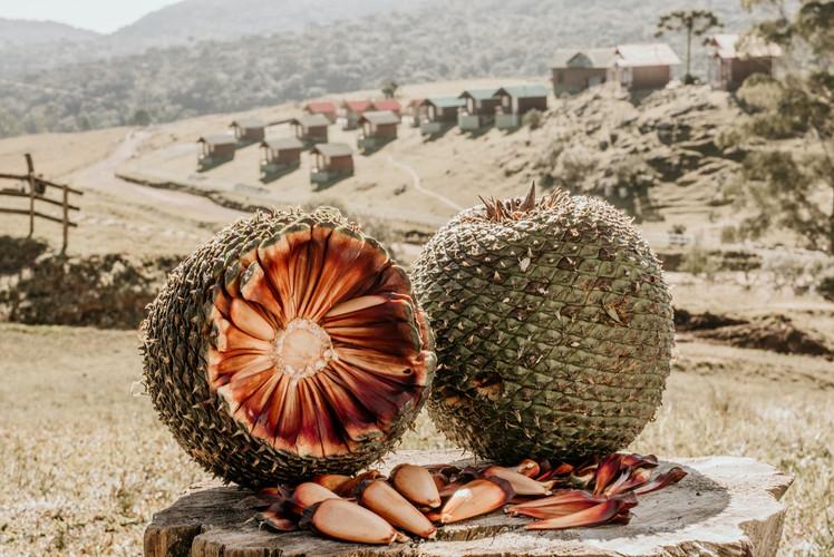 Turismo Rural - Costão do Cambará - Pous