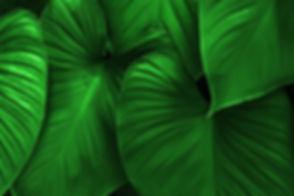 FEIULLAGE green.jpg