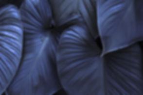 FEIULLAGE bleu PF.jpg