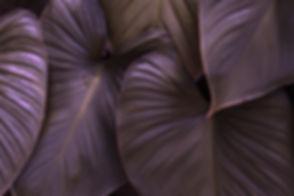 FEIULLAGE magenta.jpg