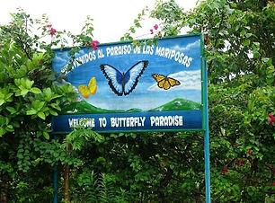 nicaragua-butterfly-reserve.jpg