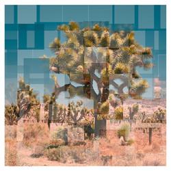 08-YOSHUA-TREE