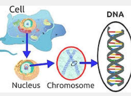 Die Qualitaet von DNA-Tests