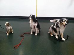 Rowan, Leela, & Cody