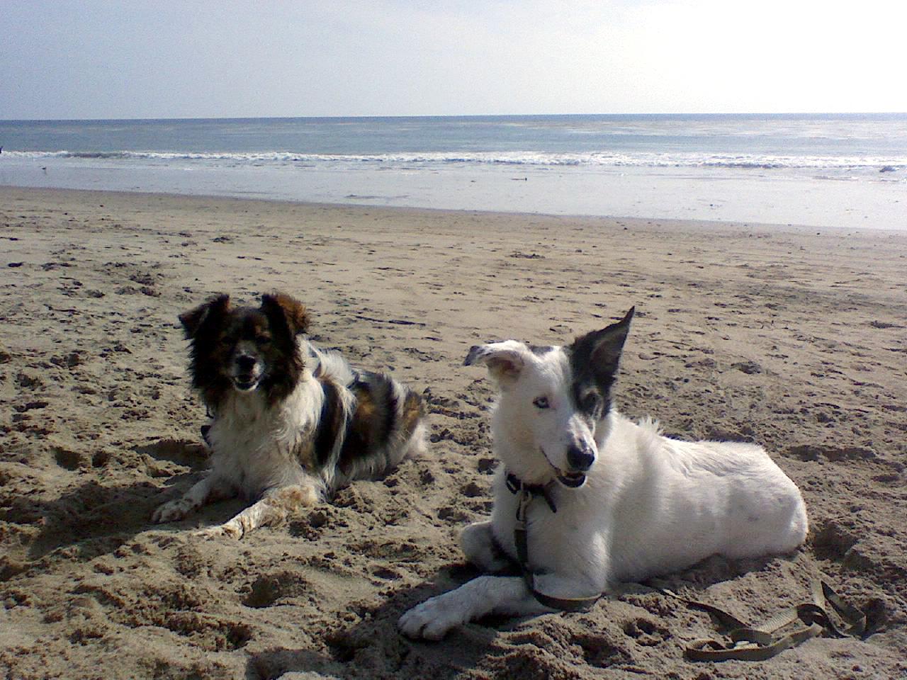Opal & Joey