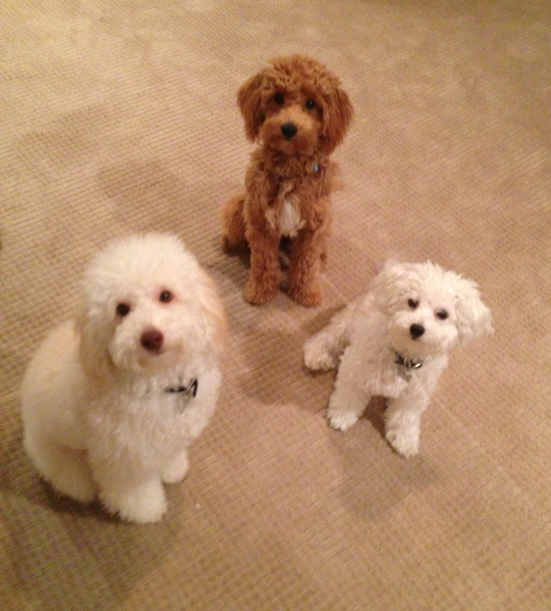 Teddy, Tobe, and Lola