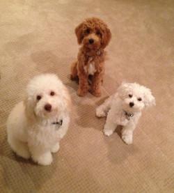 Teddy, Tobe, and Lola