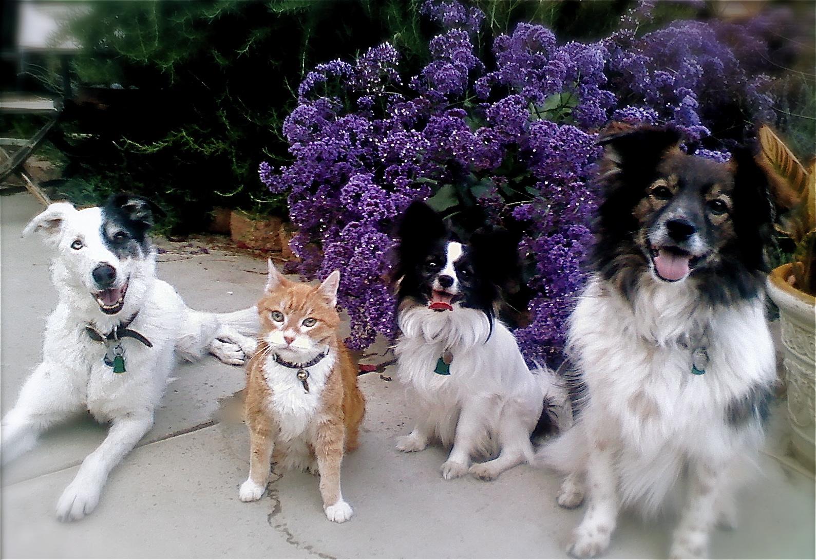 Opal, Jack, Bernie, & Joey
