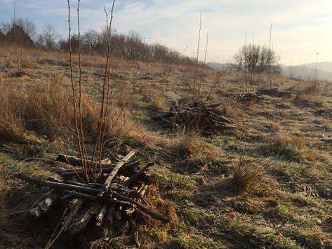 FORMATION ARBRES & CULTURE - Découverte de l'arboriculture