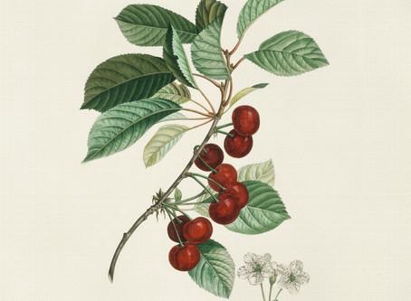 Autour de l'Arbre : Soins aux arbres fruitiers