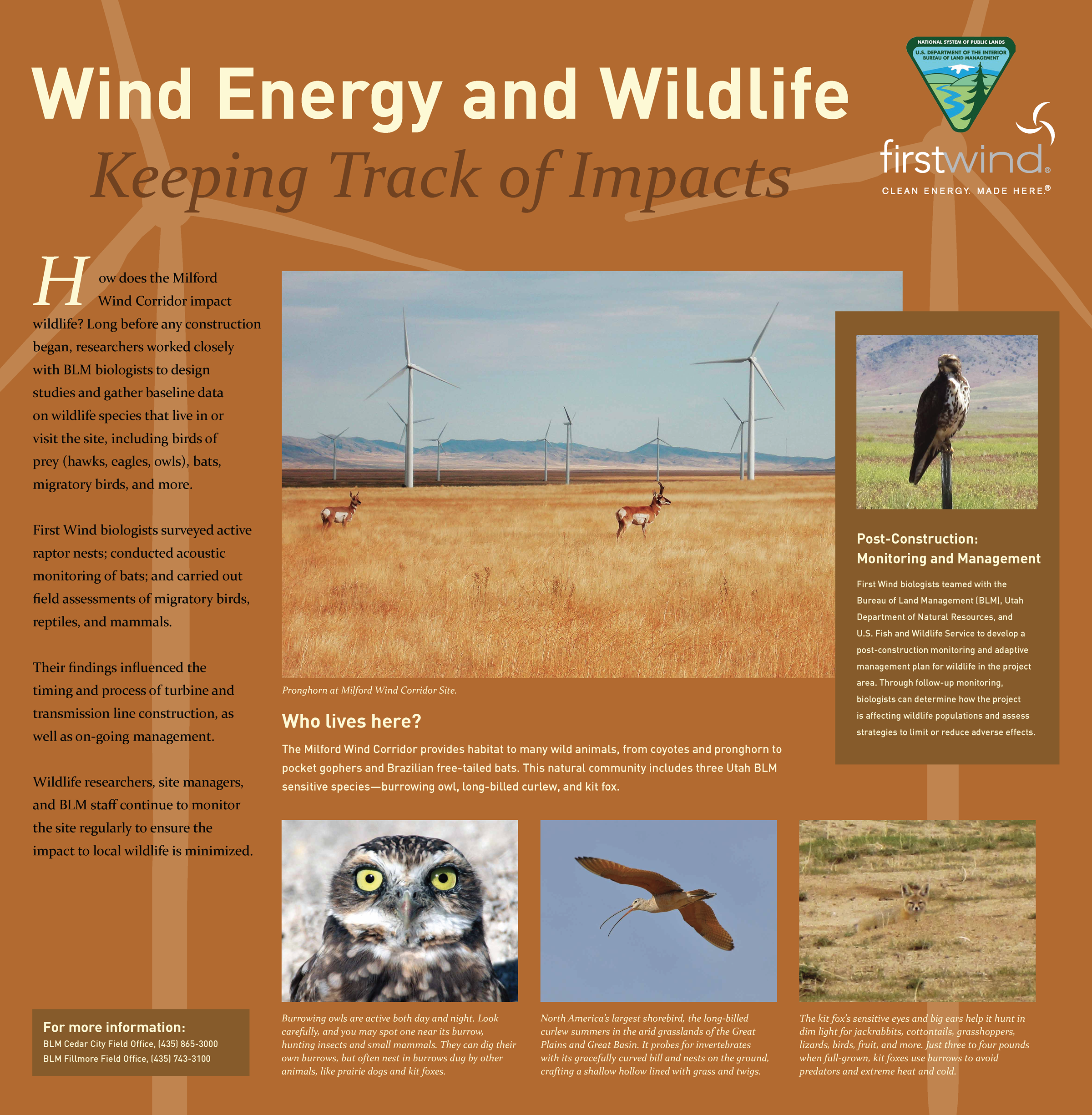First Wind Wildlife
