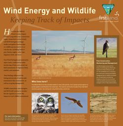 First Wind Wildlife