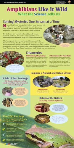Aquatic Amphibians Poster-041612