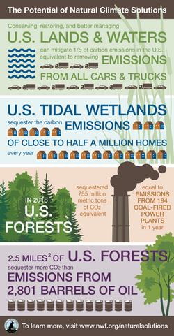 General Natural Sequestration Infographi