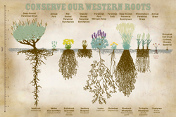 Conserve Our Western Roots Postcard-LOW RES-041516