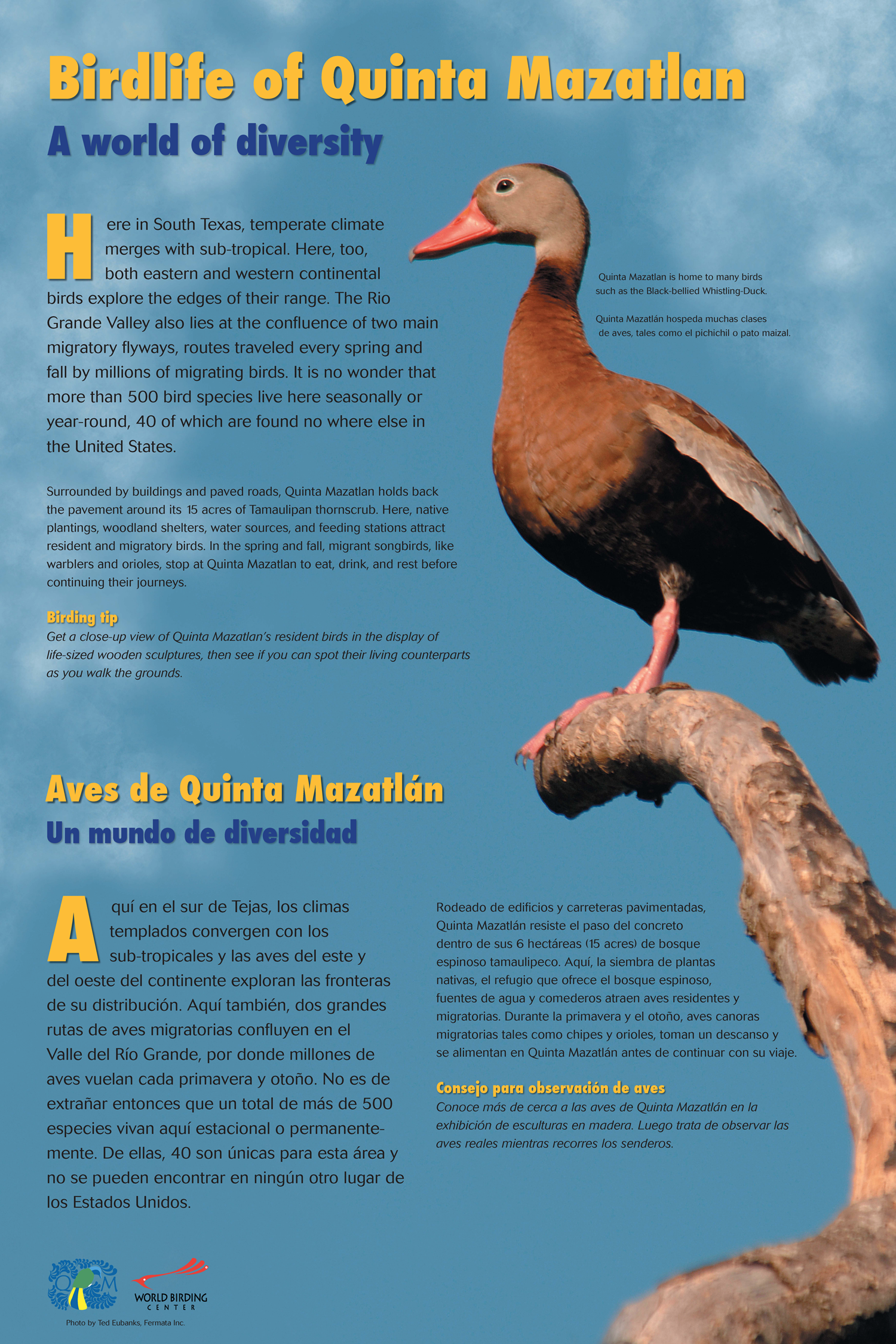 Birdlife of Quinta Mazatlan FINAL