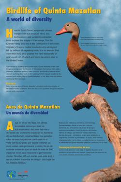 Birdlife of Quinta Mazatlan FINAL