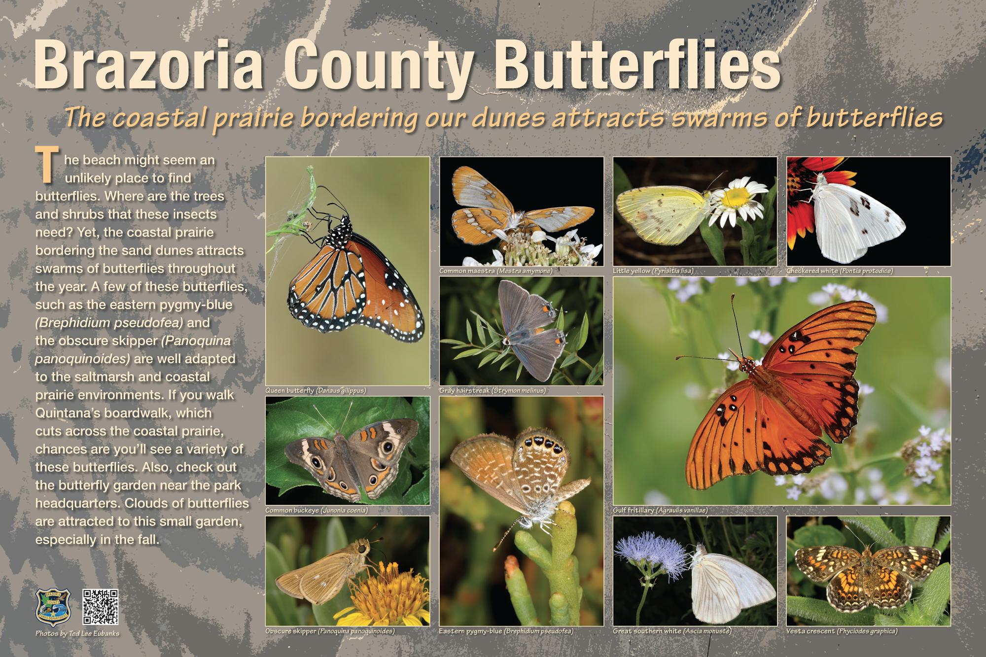 Brazoria Butterflies-FINAL-031617