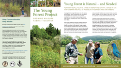 Pages from Young Forest Brochure