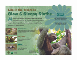 SLOW AND SLEEPY SLOTHS-FINAL-080420 copy